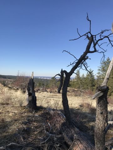 Snag in a burnt section (2008 fire)